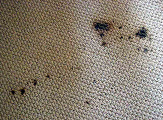 Spot & Stain Removal San Carlos